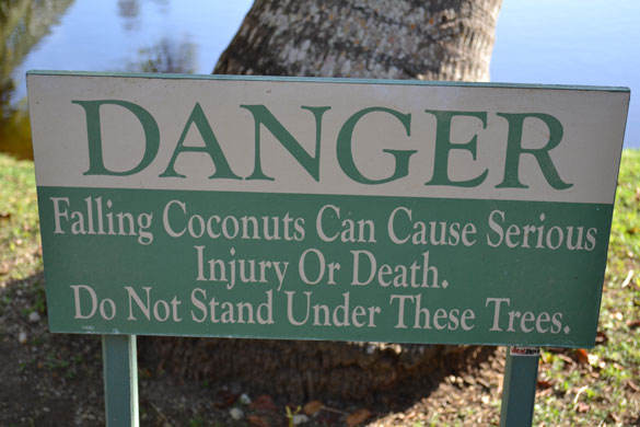 Coconut tree sign