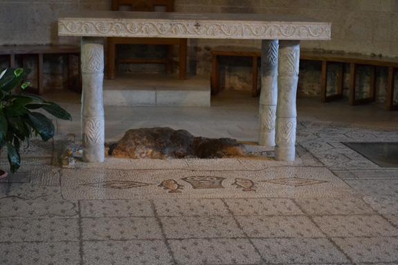 floor mosaic in Tabgha, Israel