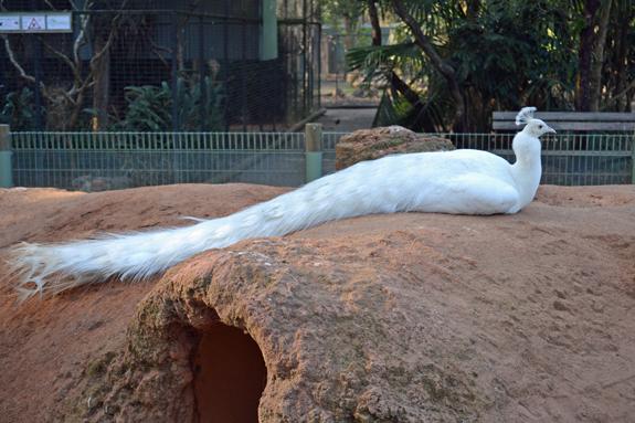 white bird in Australia
