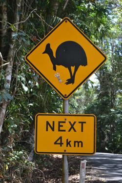 Roadkill warning