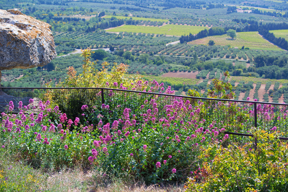 Provence view.