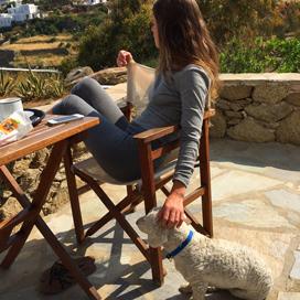 little white dog in Myknonos