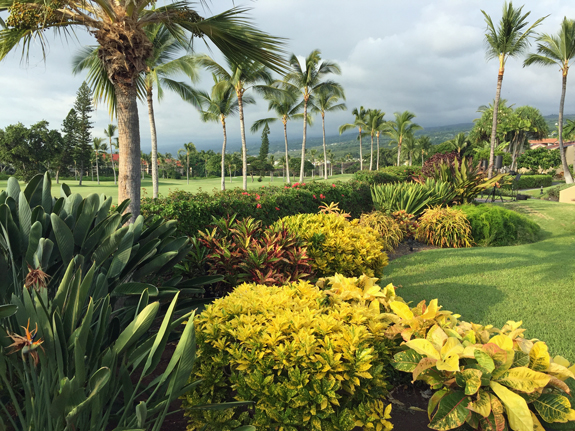 golf course view on Hawaii