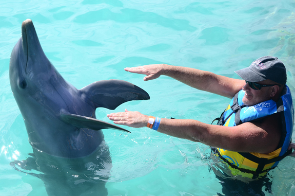 dolphin flipper wave